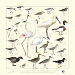 Nouvelle édition Affiche Oiseaux des plages, des rochers, et des marais côtiers de France
