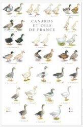 Nouvelle édition Affiche Canards et Oies de France