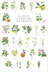 Nouvelle édition Affiche Plantes à parfums  de France