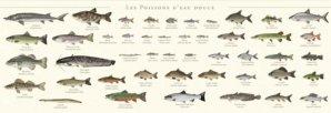 Nouvelle édition Affiche Les poissons d'eau douce
