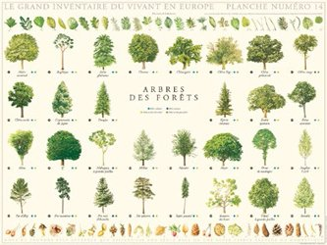 Souvent acheté avec Cultiver et soigner les arbustes, le Arbres de la forêt