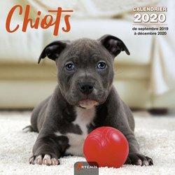 Dernières parutions sur Chien, Calendrier Chiots 2020