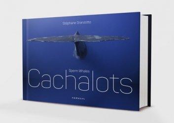 Dernières parutions sur Mammifères marins, Cachalots