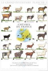Dernières parutions sur Affiches - Poster, Chèvres de France