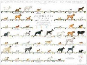 Souvent acheté avec Affiche Moutons de France, le Affiche Chiens des villes de France