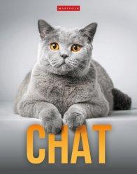 Dernières parutions sur Chat, Chat