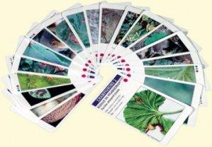 Souvent acheté avec Planti'cartes. Jeux de reconnaissance des plantes exotiques et d'ornement - Avec 62 cartes à jouer, le Croq'feuilles
