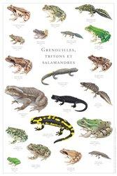 Dernières parutions dans Le grand inventaire du vivant, Grenouilles, tritons et salamandres