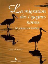Dernières parutions sur Echassiers, La migration des cigognes noires