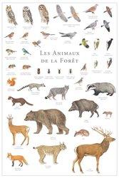 Dernières parutions dans Le grand inventaire du vivant, Les animaux de la forêt