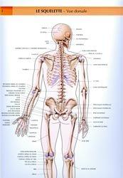 Souvent acheté avec , le Le squelette. Vue dorsale livre médecine 2020, livres médicaux 2021, livres médicaux 2020, livre de médecine 2021