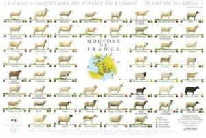 Souvent acheté avec Vaches de France, le Moutons de France