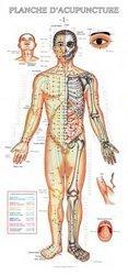 Souvent acheté avec L'anatomie à colorier, le Planches d'acupuncture des 14 méridiens