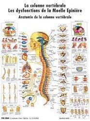 Souvent acheté avec Planche du système lymphatique, le Planche de la colonne vertébrale