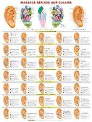 Souvent acheté avec Cartes de réflexologie pratique, le Planche de massage réflexe auriculaire