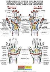 Dernières parutions sur Planches - Posters, Planche de réflexologie palmaire