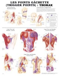 Dernières parutions sur Planches - Posters, Planche des points gâchette (trigger points) : Thorax et extrémités