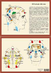 Souvent acheté avec Cartes de réflexologie pratique, le Réflexologie crânienne