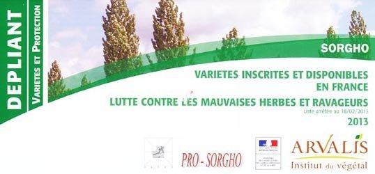 Souvent acheté avec Maïs, le Sorgho variétés inscrites et disponibles en France