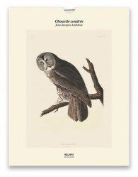 Dernières parutions sur Ornithologie, Tirage - Chouette cendrée