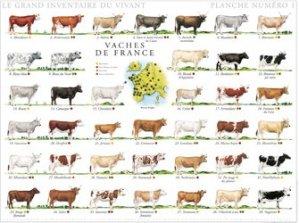 Souvent acheté avec Affiche Moutons de France, le Affiche Vaches de France