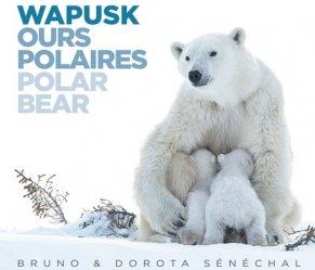 Dernières parutions sur Mammifères, Wapusk ours polaires