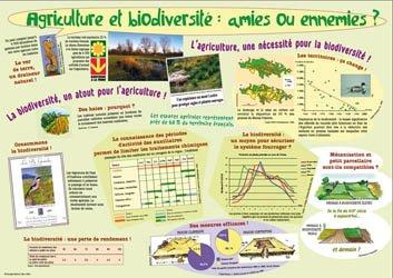 Agriculture et biodiversité : amies ou ennemies