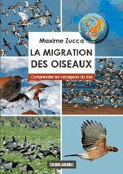 La migration des oiseaux, comprendre les voyageurs...