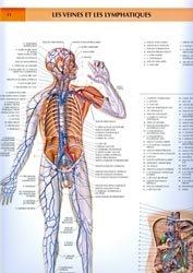La couverture et les autres extraits de Anatomie pour le mouvement