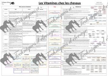 Les vitamines chez les chevaux
