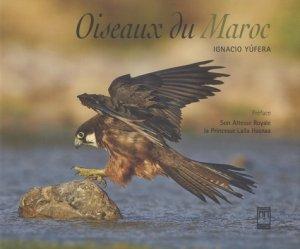 Oiseaux du Maroc