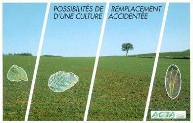 Possibilités de remplacement d'une culture accidentée