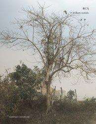 RCA (République centrafricaine)