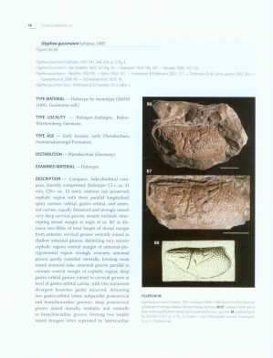 A worldwide review of fossil and extant glypheid and litogastrid lobsters - museum national d'histoire naturelle - 9782856537060 -