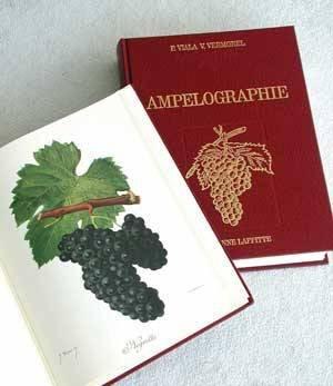 Ampélographie - jeanne laffitte - 9782862762289 -