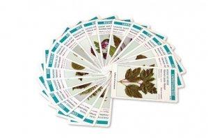 Arbo'cartes. Jeu de reconnaissance des arbres, conifères et arbustes d'ornement - Educagri - 9782844443250 -