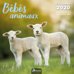 Calendrier bébés animaux 2020 - artemis - 9782816014914