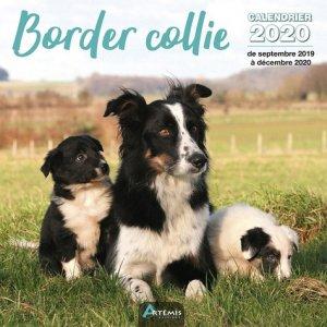 Border collie - Artémis - 9782816014952 -