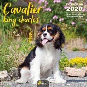 Calendrier Cavalier king charles 2020 - artemis - 9782816015003 -