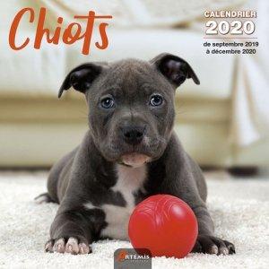 Calendrier Chiots 2020 - artemis - 9782816015072