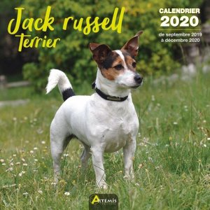 Jack russell terrier - Artémis - 9782816015140