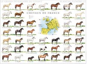Chevaux de France - gulf stream - 2225011466524 -