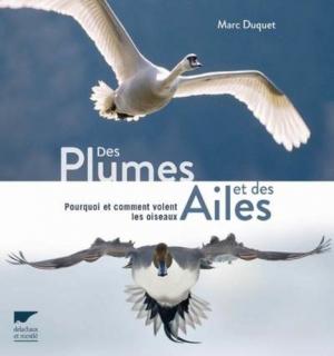 Des plumes et des ailes - delachaux et niestle - 9782603025437 -