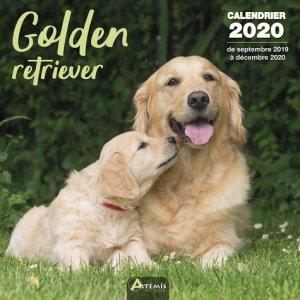 Golden retriever - Artémis - 9782816015133 -