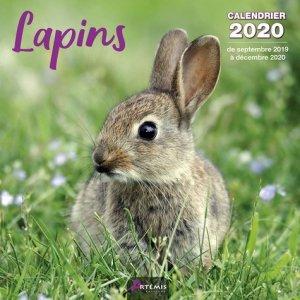 Lapins - Artémis - 9782816015164 -
