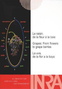 Le raisin, de la fleur à la baie - oenoplurimedia - 2224328399747 -