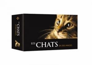 Les Chats en 365 images - hugo image - 9782755635621 -