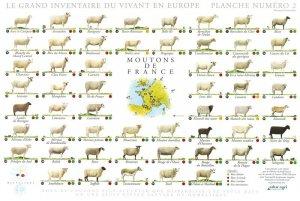 Affiche Moutons de France - gulf stream éditeur images - 2225010619518 -