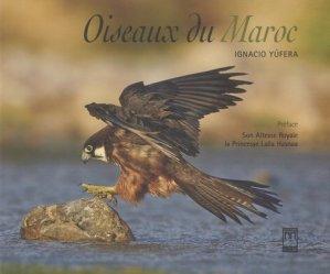 Oiseaux du Maroc - a la croisee des chemins - 9789954105252 -
