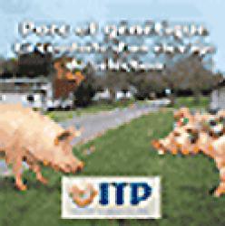 Porc et génétique La conduite d'un élevage de sélection - itp - 2223605764599 -